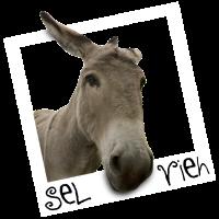 Selfie - Sel Vieh