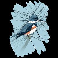 Bird of Lines