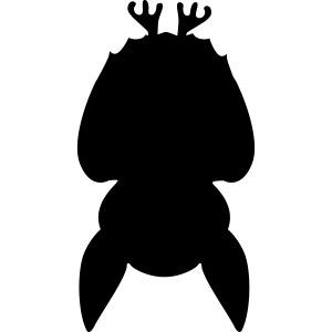 Fledermaus kopfüber