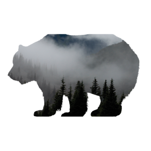 Waldbewohner / Natur Bär Wald Baum