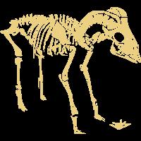 Skeleton Goat