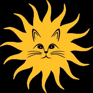 Katzen Sonne