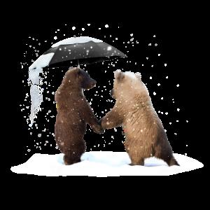 Love for bears