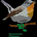 Papamoscas-gris