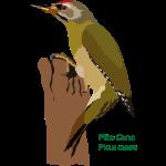 Pito-Cano