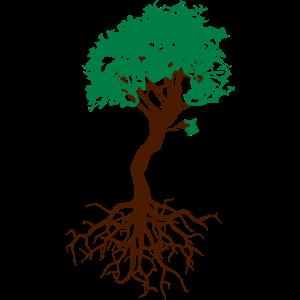 Bonsai Baum mit Wurzeln Lebensbaum