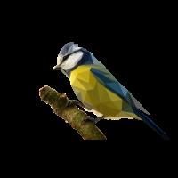 Polyvogel