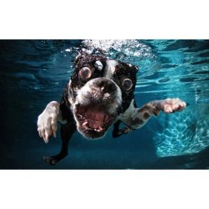 Svømmende hund