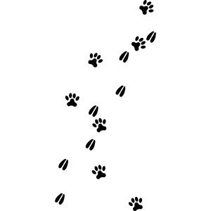 Fährten Reh Hund