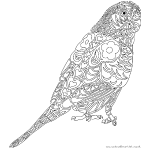 Budgie - black lines