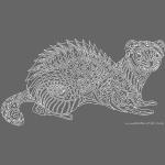 Ferret - white lines