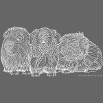 Guinea pigs - white lines