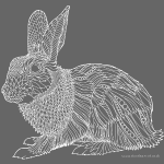 Beautiful bunny - white