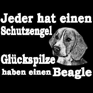Beagle Glückspilz W