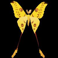 madagaskar-moon-moth-open
