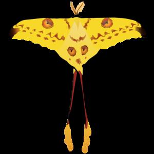 madagaskar-moon-moth