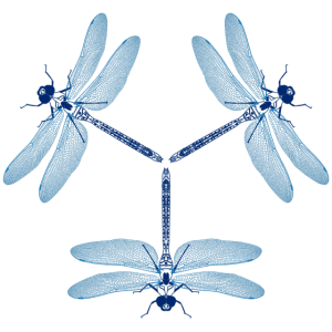 3 Libellen