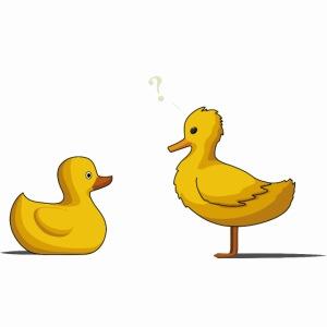 Canard Suspicieux