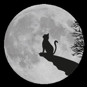 Katze Mond Vollmond cat kitty Stubentiger Felsen