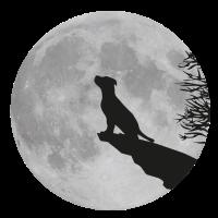 Vollmond Klippe Hund Welpe Puppy Werwolf heulen
