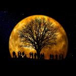 Baum im Mond