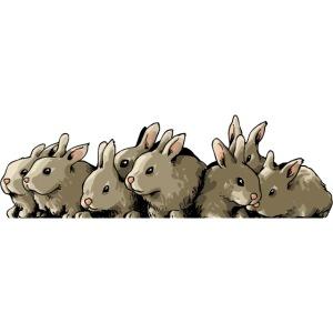 Lapins gris