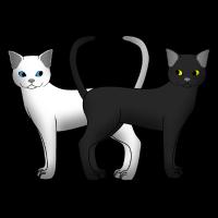 weiße und schwarze Katze