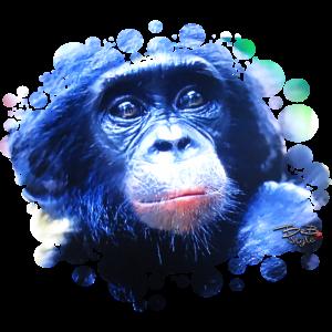 (bonobo) Menschenaffe