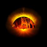 Kung Fu Fächer mit Tiger