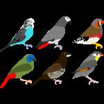 6xvogel