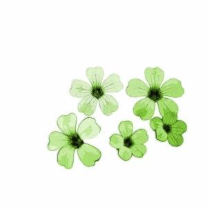 Blumen grün - Illustration