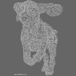 Beagle white line