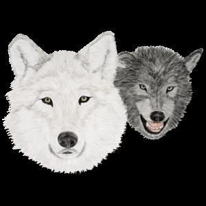 Zwei Wölfe - weiß und schwarz