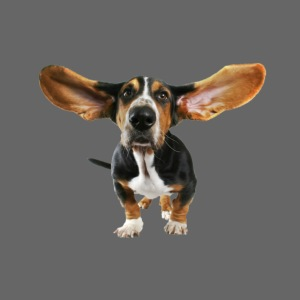 Funny Dog Transparent PNG Clipart png