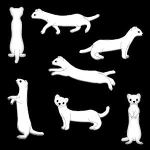 Hermelin Auswahl