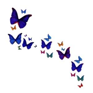 envol-e-de-papillons