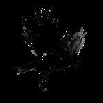 crow, corbeau
