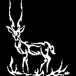 Antilope blanc