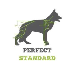 - PerfectStandard -