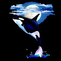 MOONSHINE ORCA
