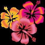 BALI Hibiscus- Blüten