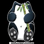 panda_tblanc