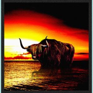 Wandering_Bull