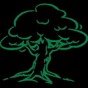 Baum Wald Natur