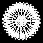 White Double Sunflower