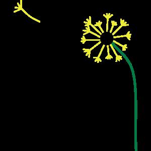 Pusteblume,Löwenzahn,Butterblume, ✔