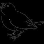 bird-1316093_1280.png