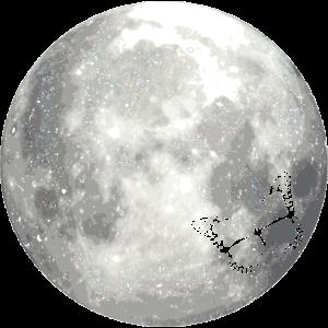 full moon butterfly Vollmond