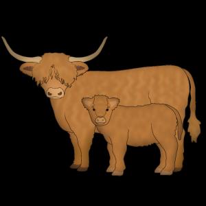 Highland Cattle schaut mi