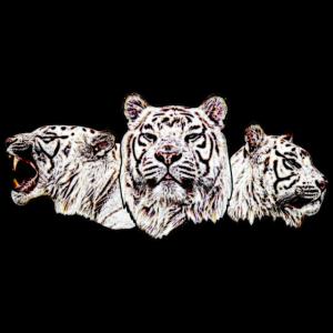 Weißer Tiger bunt